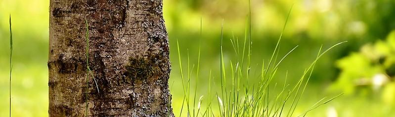 Baumschutzverordnung für Wolfratshausen Monatsversammlung 29.03.2018 der Bürgervereinigung Wolfratshausen
